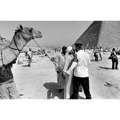 Walter Rothwell(@walter_rothwell) • Instagram 사진 및 동영상 Camel, Animals, Animales, Animaux, Camels, Animal, Animais, Bactrian Camel