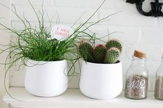 Make this cute DIY speak bubble for your plants. Let them tell you they want to survive, or make one as a gift with a loving message! Fret Saw, Small Paint Brushes, Color Crafts, Cute Diys, Wood Glue, Large Painting, Dremel, Paint Colors, Planter Pots