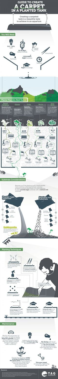 Complete Guide To Planted Tank Carpet (Infographic)