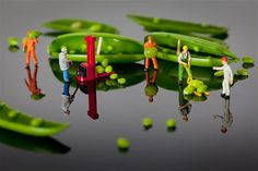 Artist David Gilliver's little people transporting peas. Gilliver began producing the little people series at the tail end of 2011, using a DSLR camera and a macro lens.Image:. Life in Smallville (© BARCROFT MEDIA/David Gilliver)