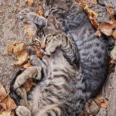 FREE Cat Watch & The Help Feral Cat Project - feral cats #cat #funnycats #feralcats #kitten #catcartoons