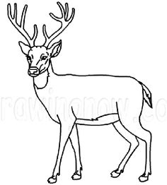 How to draw a Deer : Drawing Lesson