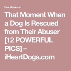 That Moment When a Dog Is Rescued from Their Abuser [12 POWERFUL PICS] – iHeartDogs.com