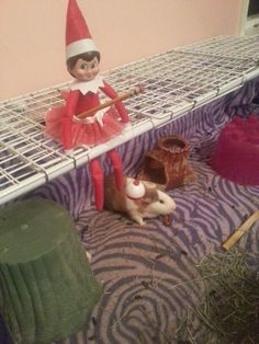 Our Elf on a shelf fishing for Guinea pigs