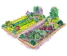 Planting Plans Inspired by the White House Kitchen Garden Colorful Vegetables, Growing Vegetables, Fresh Vegetables, Organic Gardening, Gardening Tips, Raised Garden Bed Plans, Raised Beds, Vegetable Garden Planning, Vegetable Gardening