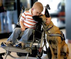 Juno, a rescue Belgian Malinois, who acts as a service dog for Lucas, a little boy with Sanfilippo syndrome