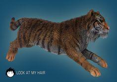 Tiger wet fur!
