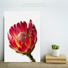 Botanical Drawings, Botanical Illustration, Botanical Flowers, Botanical Art, Protea Flower, Painting Lessons, Ceramic Painting, Watercolor Print, Painting Inspiration