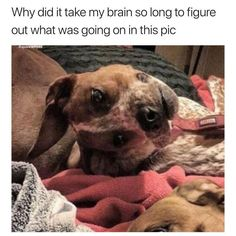 Click to see I'm so lost right now | Funny Picture on Funny Goblin, the best creative humor community to search and share your favorite funny pictures, memes, gifs, jokes, humour pics, videos on internet.