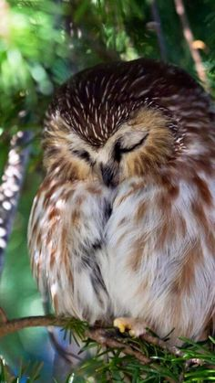 Image viaAn owl knows all the secrets of the forest, but tells them in a voice we cannot understand.Image viaBaby Owl Pictures: Photos of Cute Animals, Young OwlsImage Beautiful Owl, Animals Beautiful, Animals And Pets, Cute Animals, Wild Life Animals, Nature Animals, Owl Pictures, Owl Bird, Tier Fotos