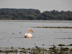 Partizani, Delta Dunării Danube Delta, Places, Animals, Inspiration, Biblical Inspiration, Lugares, Animaux, Animal, Animales