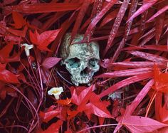 RICHARD MOSSE-Of-Lilies-and-Remains