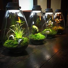 【mosslight1955】さんのInstagramをピンしています。 《がんこ岸和田五風荘 コラボ展示  #モスライト#mosslight -LED#LED#Lighting#コケ#moss#terrarium #テラリウム#lamps#interiordesign#plants#観葉植物#苔#mossgarden#インテリア#こけ#苔テラリウム#mossterrarium#ボトルテラリウム#苔盆栽#コケリウム#mossarium#mossmeister#照明器具#照明器具#lightingfixture》