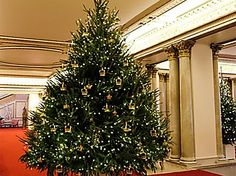 Buckingham Palace dressed for Christmas - see the pics!