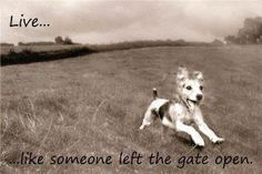 Live...Like someone left the gate open