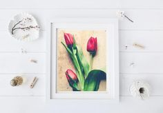 Spring Tulip Photograph  Botanical Wall Art  Flower by joystclaire
