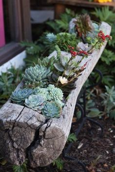 succulents in a log planter.I don't know what I like more, the log planter or the succulents. Garden Design, Planting Flowers, Plants, Succulents, Succulents Garden, Log Planter, Front Yard, Outdoor Gardens, Rock Garden