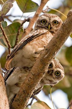 Picture taken in koshi wildlife reserve, Nepal.