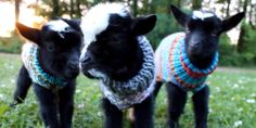 18 Adorable Animal Videos That Melted Our Hearts in 2015  - HouseBeautiful.com