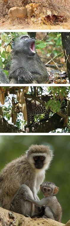 Botswana Safaris to Seba Camp in the Okavango Delta