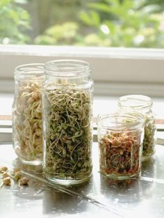 How to Sprout Seeds : How-To : DIY Network