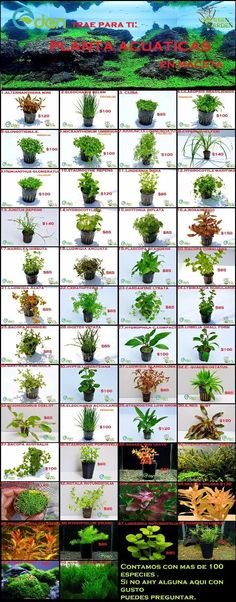 plantas acuaticas premium  en maceta mas de 50 especies