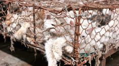 More than one million people have called for an end to the country's permission of dog meat sales