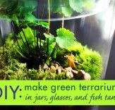How to Create Amazing Terrariums That'll Green Up Your Space Year-Round