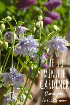 Only got 10 minutes to spare for gardening? Here are some quick jobs you can fit in that will give you a big return.