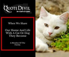 Cheap Pet Insurance in Ireland for your beloved animals at Quote Devil! We offer cheap Dog insurance with the best medical care for your pets. Pet Insurance Quotes, Cheap Pet Insurance, Cat Insurance, Insurance Broker, Medical Care, Peace Of Mind, When Us, Your Pet