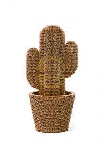 Saguaro Medium