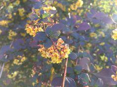 Garden yellow flowers Flower Photos, Yellow Flowers, All Over The World, My Photos, Bouquet, Fruit, Garden, Plants, Life
