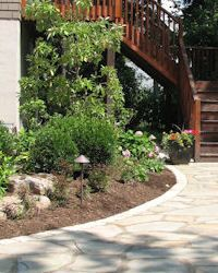 Landscape Design- Rain Garden