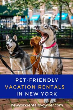 Are you planning a trip to NY with your beloved pets? Instead of worrying about pet hotels and boarding, come stay at one of these pet-friendly properties for the best vacation ever. New York Summer, New York Winter, New York Vacation, New York Travel, Summer Vacations, Best Vacations, Fire Island New York, Lake Placid New York, Chautauqua Institution