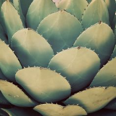 Cactus  5x5 Fine Art Photograph by Leefee on Etsy, $15.00