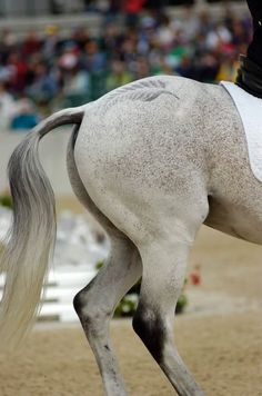 Fern Leaf quarter mark....I'm betting this is a Team New Zealand horse! Go the Kiwis!
