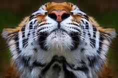 Online Contest - Your Best Animal Action Shot - Fine Art America