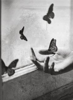 Volare... tra sogno e realtà...