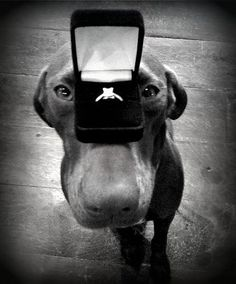 The Proposal~♛.. I would DIE if my boyfriend did this since our puppy is our baby!