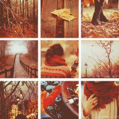 Autumn outdoors trees autumn leaves