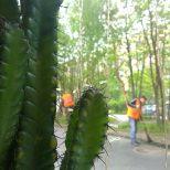 Kaktus-baari. Olut (Baltika tietty) 130 ruplaa.