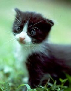 TOOOOO Cute