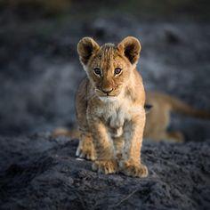"56 Likes, 1 Comments - Gabi Guiard Photography (@gabi_guiard) on Instagram: ""The future is coming #okavangodelta #botswana #african_portraits #wildlifephotography…"""