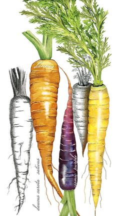 Botanical Carrots (Mary Lake Thompson)