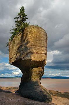 Hopewell Rocks Rock at Low Tide, Bay of Fundy - New Brunswick, #canada {Photo by Marcus Frank via Flickr]