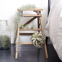 Tamara our Tillandsia Usneoides is the perfect plant for beginners and busy Londoners. Learn more about the Spanish Moss & buy online from Patch. Free Plants, Air Plants, Indoor Plants, Tillandsia Usneoides, Corn Plant, Boston Ferns, Asparagus Fern, Perfect Plants, Spanish Moss