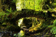 Secret tooth fairy bridge by Richard Hunter