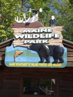 See 53 photos and 18 tips from 709 visitors to Maine Wildlife Park. Fall Vacations, Johnson Family, Wildlife Park, Portland Maine, Future Travel, Vacation Spots, Four Square, New England, Travel Destinations