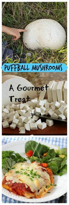 Puffball Recipes for Pinterest