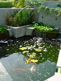 contemporary - coy or goldfish pond